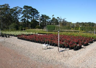 Overland Nurseries - Wholesale Plant Nursery - Landscape View